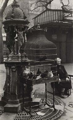 musicophilia:  i12bent:    Rosalie Gwathmey (Sep. 15, 1908 - 2001): Paris BirdMarket, 1950s - gelatin silver print (Smithsonian)