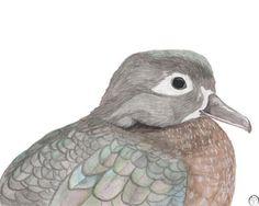 Wood Duck watercolor painting bird art print natural art Watercolor Bird, Watercolour Painting, Pigment Ink, Bird Art, Fine Art Paper, Etsy Store, Giclee Print, Eco Friendly, Art Prints