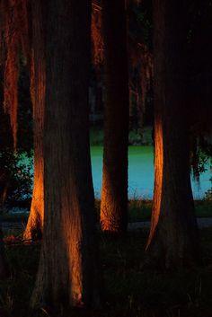 * Going Home Soon 1: John Chesnut Sr Park ~Palm Harbor, FL ~by Waldek & Lidka *