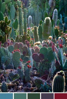 Achados da Bia | Inspiração do Dia | Cactus