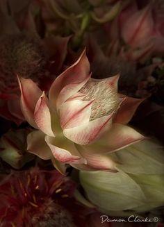 Intro To Macro - Digital Photo Magazine Close Up Photography, Macro Photography, Inspiring Photography, Macro Flower, Flower Prints, Fractals, Bouquet, Fine Art, Damon