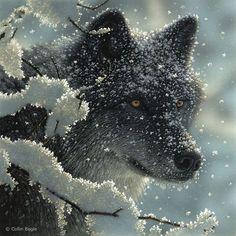 "Wildlife Paintings, Wildlife Art Prints by Artist Collin Bogle - ""Black and White"""