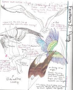 Feathers Tutorial 2: Flying by MaximWolf on DeviantArt