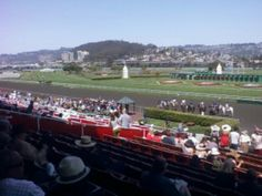 A sunny day at the races.albany/berkeley ca