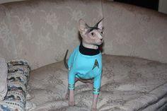 ☮✿★ CATS ✝☯★☮ Mr. Spock