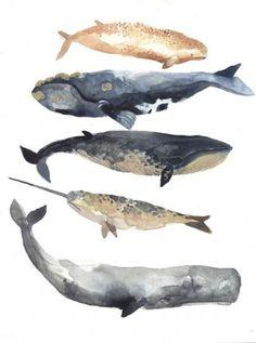 Watercolour whales by Michelle Morin: unitedthread.blogspot.com.es