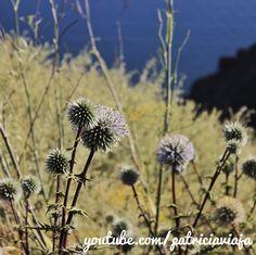Continue no caminho... aprecie a paisagem... leve o tempo que precisar... você sabe que vai chegar lá Santorini, Creta, Continue, Dandelion, Greece, Flowers, Plants, Landscape, Weather