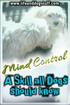 Mind Control - A Skill All Dogs Should Know. My dog Buffy let us in on the pet's secret to complete world domination. Funny Dog Memes, You Funny, Funny Dogs, Cute Dogs And Puppies, Baby Dogs, Pet Dogs, Animals And Pets, Funny Animals, Food Dog