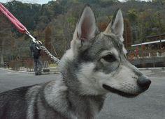 犬の首輪とリード しあわせカラー  http://www.shiawasecollar.com/   犬の首輪 首輪 カラー ハーフチョークカラー リード ハンドメイド オーダーメイド 犬 dog collar しあわせカラー shiawasecollar dog'scollars