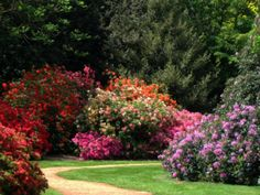 The Savill Garden in Windsor Park, Greater London.  'One of Britain's greatest ornamental gardens…Neither a botanical garden, nor a kitchen garden attached to a great house, it is a garden for the garden's sake'  the website informs us.