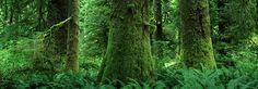 BC trees Tofino