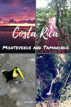 Things to do in Monteverde and Tamarindo
