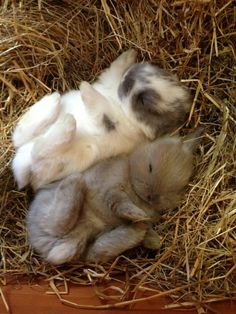 Sleeping baby bunnies.