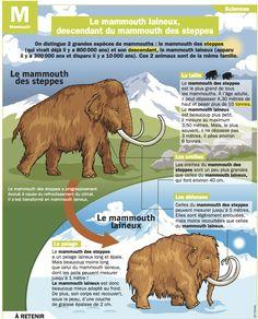 Fiche exposés : Le mammouth laineux, descendant du mammouth des steppes