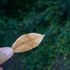 #autumn #leaf #green 🍂🍁🌲🏕