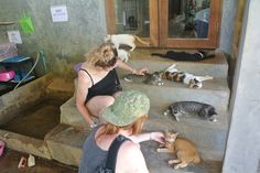 I say Let's Go : An obliged visit to the Lanta Welfare Animal in So...