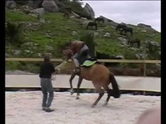Schooling the Young Horse 2: Will and Salinera - YouTube
