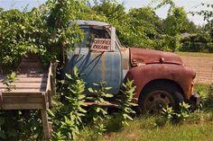 Golden Earthworm Farm in Jamesport... Golden Earthworm is located at 652 Peconic Bay Blvd. in Jamesport.