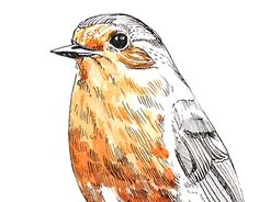 """Check out new work on my @Behance portfolio: """"robin"""" http://be.net/gallery/51942905/robin"""