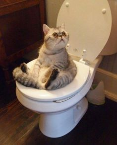 This cat hanging out on the toilet. | 31 Animal Pictures | Just to make your Saturday that much better.