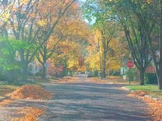Fall in Full Swing..(through my windshield).Athens Ohio 2012
