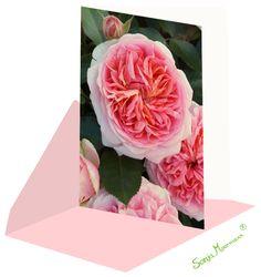 Die Rosenkarte ist ohne Text und daher für verschiedenste Anlässe geeignet. Flowers, Plants, Pink Roses, Thanks Card, Joie De Vivre, Birth, Florals, Planters, Flower