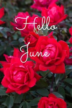 Most recent Pic June 2020 calendar wallpaper Style Quick…you need to make a diary in your daughter's group, detailing almost all methods, game titl December Tumblr, Hello December Quotes, Happy New Month Quotes, December Images, June Quotes, New Month Wishes, Hello November, October Poem, Hello Quotes