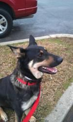 Bristol is an adoptable German Shepherd Dog Dog in Brookfield, WI. I'm Bristol! I am a German Shepherd Dog ready to give you love! I am such a friendly and loving dog that it was nearly impossible f...