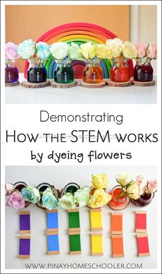 Botany Unit: How the STEM works You are in the right place about Dye jeans Here we offer you the most beautiful pictures about the Dye jeans you are looking for. When you examine the Botany Unit: How Preschool Science, Science For Kids, Toddler Preschool, Teaching Science, Montessori Activities, Preschool Activities, Montessori Homeschool, Montessori Classroom, Homeschooling