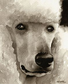 POODLE Watercolor Painting Dog ART Signed by Artist DJR