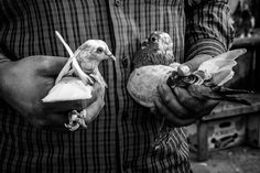 Birds #documentaryphotography #blackandwhite #bnw