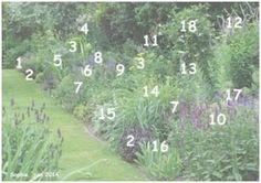 1. et 17.: 'Nimbus' et 'Orion'. 2. Sedum 'Karfunkelstein'. 3. Euphorbia schillingii. 4. Thalictrum 'Elin'  5. un Kalimeris lilas au petit nom perdu. 6. Digitalis lutea 7. Salvia 'Amethyst'.  8. Nepeta 'Six Hills Giant'.  9. Sanguisorba menziesii. 10. Stachys 'Hummelo': 11. et 12.: Veronicastrum 13. Achillea 'Cloth of Gold'. 14. Hemerocallis jaune pâle  15. Stachys 'Cotton Ball'  16. Iris pumila 'Blue Denim' 18. Clematis 'Betty Corming'
