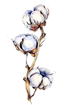 48 Ideas For Watercolor Art Plants Water Colors Botanical Drawings, Botanical Art, Botanical Illustration, Watercolor Illustration, Pencil Art Drawings, Art Sketches, Watercolor Flowers, Watercolor Paintings, Painting & Drawing