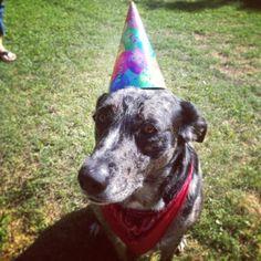 Catahoula dog birthday party