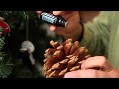dōTERRA Tuesday Tip-off: Holiday Edition - White Fir Essential Oil