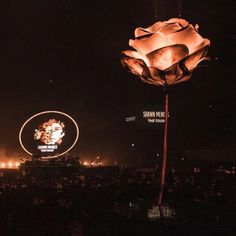 Shawn mendes image · album, concert, and rose image Shawn Mendes Tour, Shawn Mendes Concert, Shawn Mendes Quotes, Shawn Mendes Imagines, Photo Wall Collage, Picture Wall, Aesthetic Photo, Aesthetic Pictures, Shawn Mendes Wallpaper