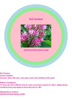 Bach Flower Red Chestnut Energy Circle.