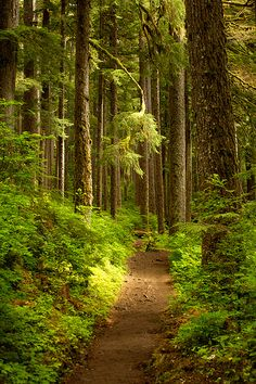 I want paths through the forest that will surround the outside of my property of my next house. Forest Path, Tree Forest, Conifer Forest, Magic Forest, Beautiful Forest, Beautiful Places, Forest Bathing, Photos Voyages, Walk In The Woods