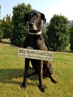 Pregnancy Announcement with Dog! Custom wording! by staci