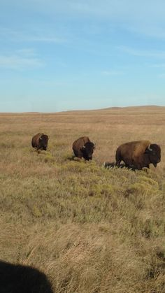 Students will read nonfiction text, discuss and brainstorm prairie facts, then write an informative summary about what they learned.(map and text related) Kansas Day, Flint Hills, Brainstorm, Summary, Nonfiction, Students, Facts, Map, Non Fiction