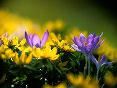 spring | libros para aprender Spring Framework y String MVC