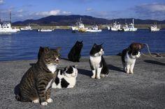 港のある町には、猫がよく似合う【画像多数】