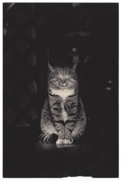 A Box of Ku by Masao Yamamoto // Cats. Pretty Cats, Beautiful Cats, Animals Beautiful, Cute Animals, Animal Gato, Mundo Animal, Crazy Cat Lady, Crazy Cats, I Love Cats