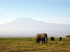 Kilimanjaro, one of the Seven Summits