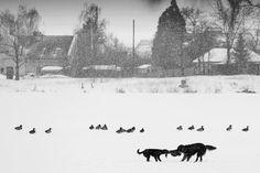 redbirdinthesnow:    winter 2011 | Flickr - Photo Sharing! on We Heart It. http://weheartit.com/entry/36746010