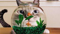 Pet Style#Cat Trap#cute Cat#pet of the year