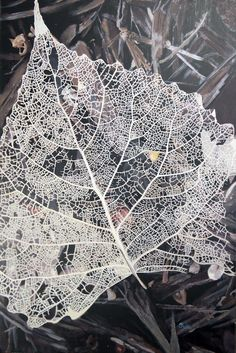 """So, here's that week end project painting that I've been struggling over! It's finally finished, It's 24"""" x 36"""" and I'll Titled it """"Still, Beauty Remains"""", The lacing of the leaf was the challenge, and that's an understatement! And the objects under the lace!"""
