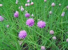 Naturaleza en casa: las 5 hierbas multibeneficios que puedes plantar en tu jardín | Noticias | eRural.com