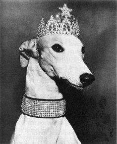 LADY GREYHOUND