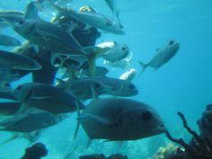 Coral World, St. Thomas, USVI